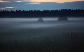 Обои Туман, поляна, лес, 158