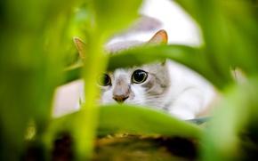 Обои листья, зеленый, Кошак