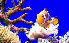 Картинка Море, океан, кораллы, рыба, цвет