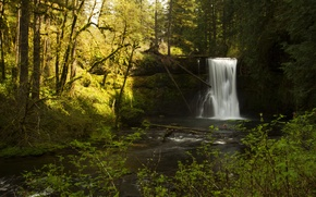 Картинка Silverfalls State Park, водопад, деревья, кусты, мох, Oregon, лес, ручей, солнце, ветки, камни, США