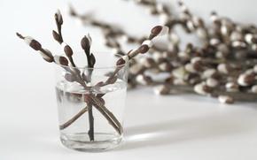 Картинка цветы, растения, ветка, ваза, ива