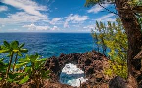 Обои природа, брызги, море, дерево, растение, небо, скалы, облака