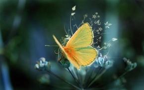 Картинка желтый, узор, бабочка