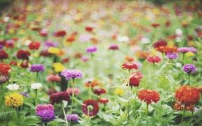 Картинка цветы, лепестки, много, разные