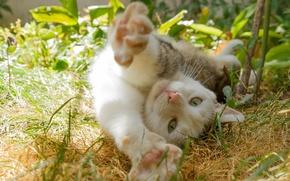 Картинка кошка, кот, потягушки