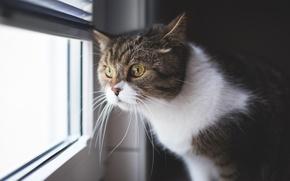 Обои взгляд, окно, кот