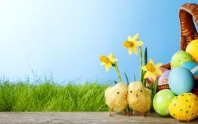 Картинка трава, цветы, цыплята, яйца, весна, colorful, пасха, grass, flowers, нарциссы, spring, крашеные, eggs, easter, daffodils, …