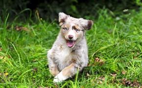 Обои лето, трава, собака