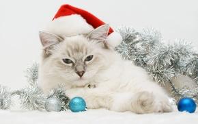 Картинка кошка, новый год, мишура