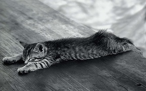 Обои расслабился, кошак, Черно-белый