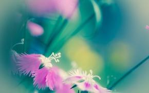 Картинка макро, цветы, настроение, розовый, светлый, необычные лепестки