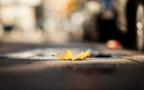 Картинка желтый, лист, улица, опавший, боке, осенний