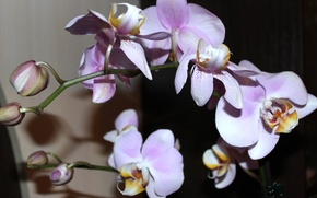 Картинка цветы, красота, орхидеи