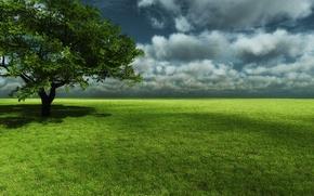Обои дерево, небо, трава, поле