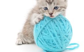 Картинка клубок, котенок, белый фон, пушистик