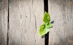 Картинка макро, зеленый, фон, обои, забор, листик, деревянный, wallpaper, листочки, широкоформатные, background, полноэкранные, HD wallpapers, широкоэкранные