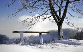Картинка зима, дерево, скамья