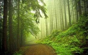 Обои дорога, лес, природа
