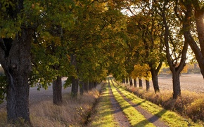 Обои утро, дорога, деревья, природа, пейзаж