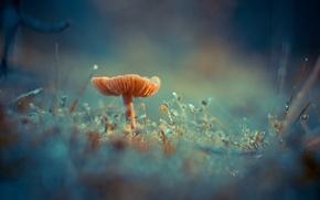 Обои грибок, Antonio Coelho, роса, трава, гриб, мох