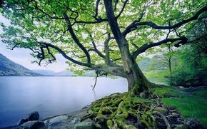 Обои Корни, Вода, Горы, Дерево, Мох, Трава