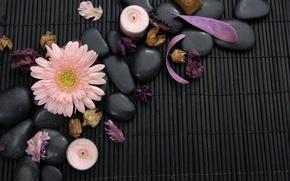 Картинка цветок, лепестки, flower, Spa, спа, гербера, petals, gerbera, спа камни, Spa stones