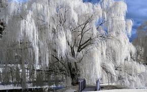Картинка зима, снег, мост, мороз, речка, ива