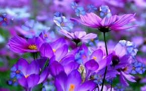 Обои макро, линии, цветы, краски, лепестки, крокус, космея