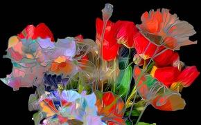 Картинка линии, цветы, маки, лепестки