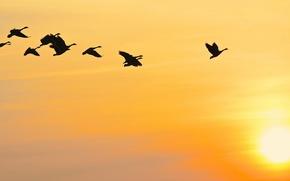 Обои птицы, небо, закат