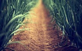 Картинка песок, зелень, трава, земля, растение, растения, фокус, размытие, стебель, аллея, тропинка, стебельки, огород, аллеи, макро …
