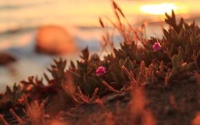 Картинка закат, цветы, Northern California