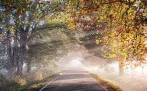 Обои листва, деревья, свет, дымка, утро, дорога, осень, природа