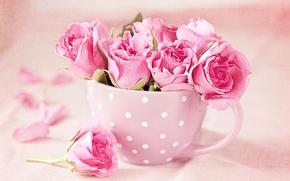 Картинка фото, Цветы, Розовый, Розы, Чашка