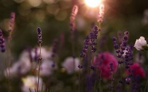 Обои цветы, цветочки, flower, flowers, поле, день