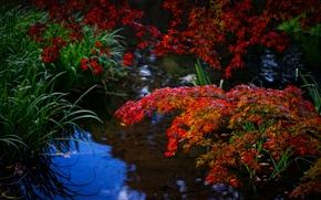 Картинка осень, лес, трава, листья, вода, ветка