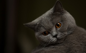 Картинка глаза, кот, мордочка