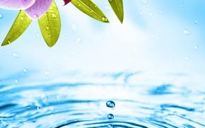Картинка вода, цветы, орхидея
