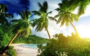 Картинка песок, море, пляж, тропики, пальмы, берег, summer, sunshine, beach, sea, ocean, paradise, vacation, palms, tropical, ...