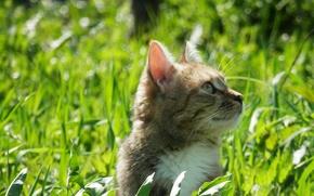 Картинка зелень, кошка, трава, весна, май, cat, spring