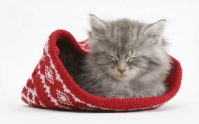 Обои котенок, шапка, Кот, спит