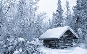 Обои лес, избушка, деревья, Финляндия, хижина, снег, зима