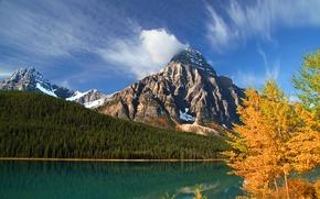 Картинка осень, лес, деревья, горы, озеро, Канада, Альберта, Banff National Park, Alberta, Canada, Банф, Howse Peak, …