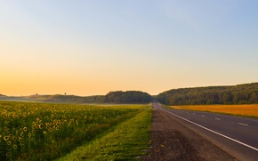 Картинка дорога, лето, подсолнухи, пейзаж, природа, туман, рассвет, пейзажи, красиво