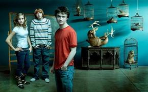 Обои Hermione Granger, Rupert Grint, Ron Weasley, Руперт Гринт, Гарри Поттер, Дэниэл Рэдклифф, Daniel Radcliffe, Harry ...