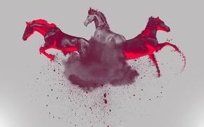 Обои свет, цвет, лошадь, тройка