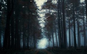 Картинка туман, утро, деревья, лес, нарисованный пейзаж