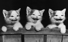 Обои котята, доска, кошки