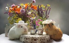 Картинка цветы, лилия, букет, шляпа, чашка, морская свинка
