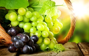 Картинка листья, солнце, блики, корзина, ягода, виноград, грозди